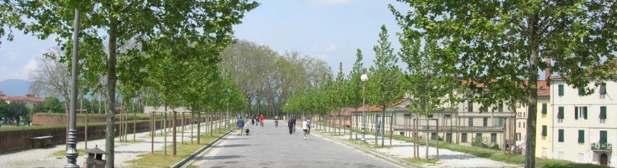 Lucca gira in bici