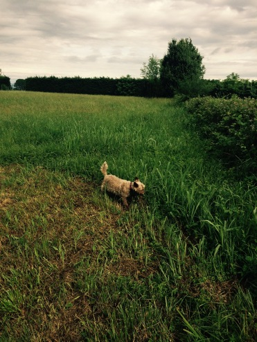 Some French motorway service stations have wonderful areas to walk your dog......