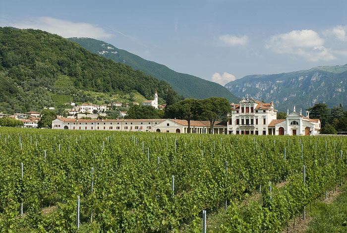 Villa Angarano and the vineyards
