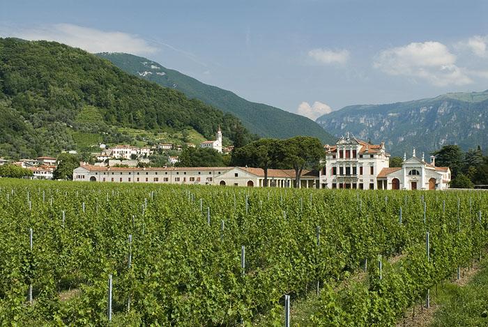 Villa Angarano and the vineyards