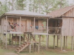 Typical forest dwelling, Honduras