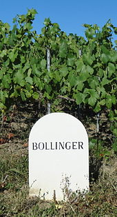 A Bollinger maker near Ay, Marne Valley