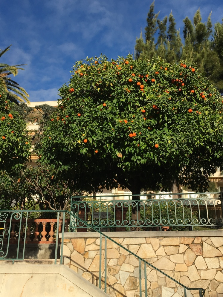Oranges on the trees in February - that's how mild it is in the winter in the South of France.