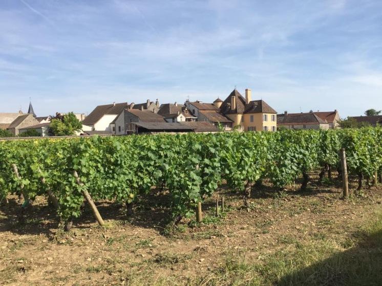 The village of Puligny Montrachet, Burgundy, France