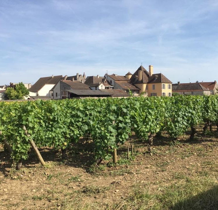 The village of Puligny Montrachet, Burgundy, France