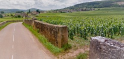 Vineyards are frequently surrounded by walls.