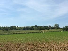 Rolling fields of Emilia Romagna