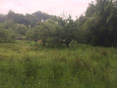 Lake District - hillside
