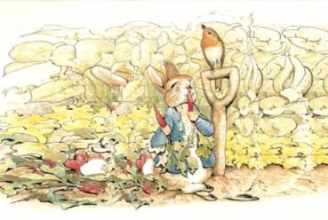 Peter Rabbit eating delicious carrots from Mr McGregor's garden