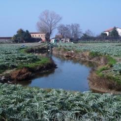 Venice lagoon - island of Sant'Erasmo, famed for its carciofi