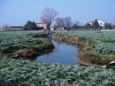 Venice lagoon - island of Sant'Erasmo, famed for its carciofi