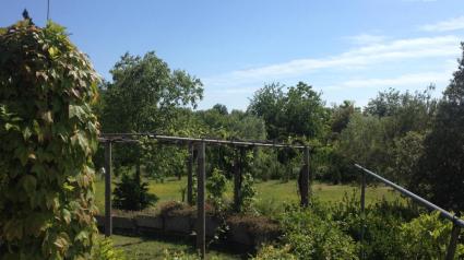 A garden on the island of Sant'Erasmo
