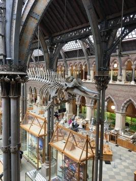 Natural History Museum - dinosaur skeleton