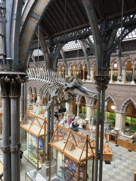 Natural History Museum - dinosaur skeleton