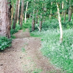 The woodland path