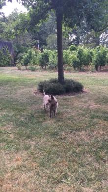 Sasha enjoys the garden at Chateau de Beaulieu
