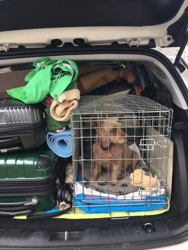 Sasha 'the dog' prepares for the journey