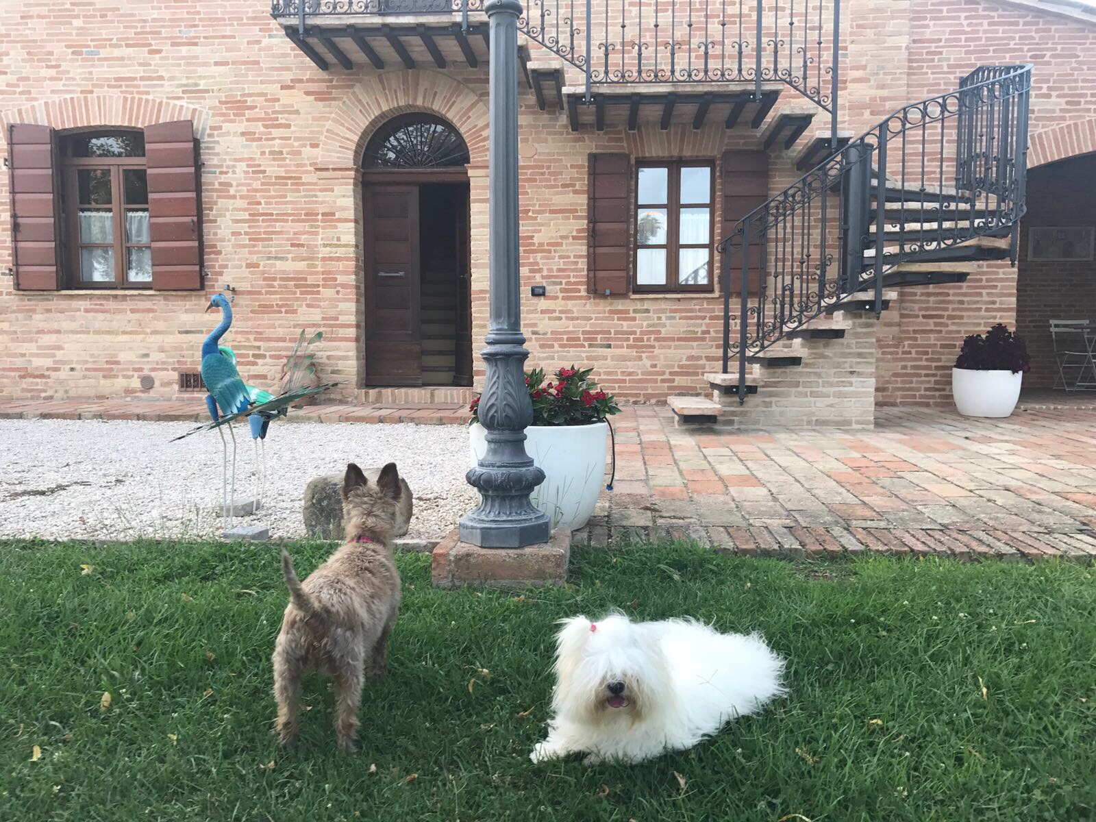 On holiday in Italy - 2018 Sasha and the resident pooch Gioia relax in the garden