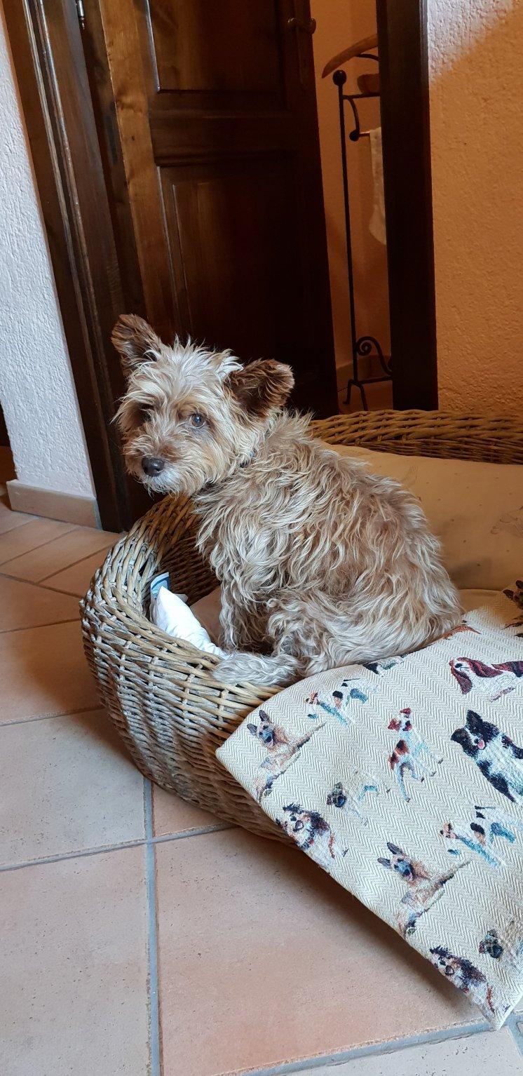 Sasha enjoys the dog basket, cushion and doggie blanket - La Meridiana