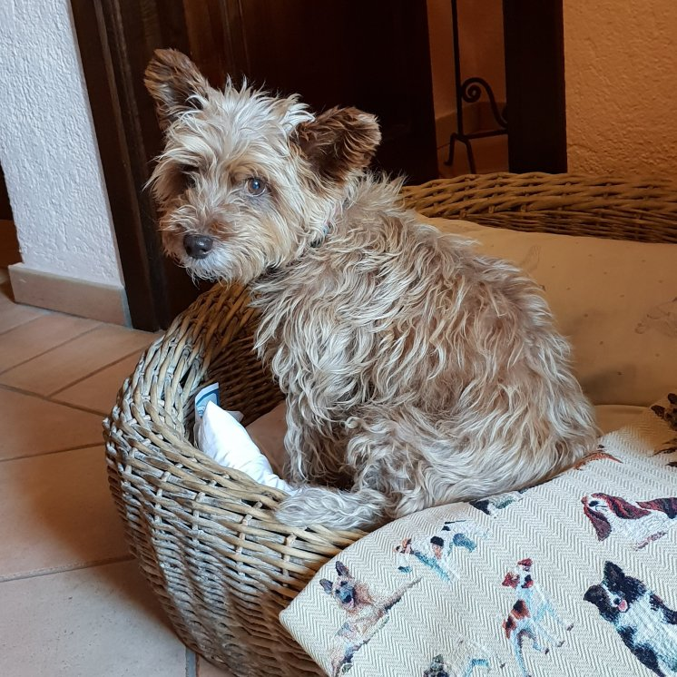 Sasha enjoys the dog basket, cushion and doggie blanket - La Meridiana
