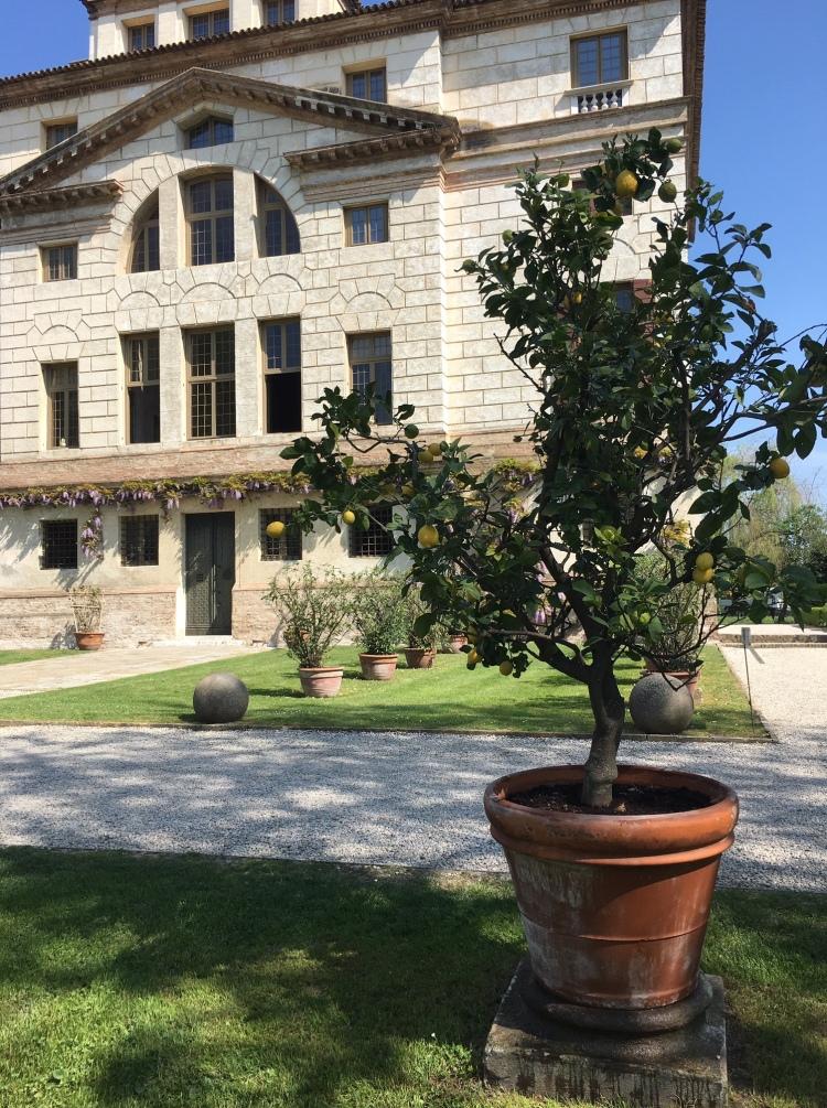 Villa Malcontenta - garden detail