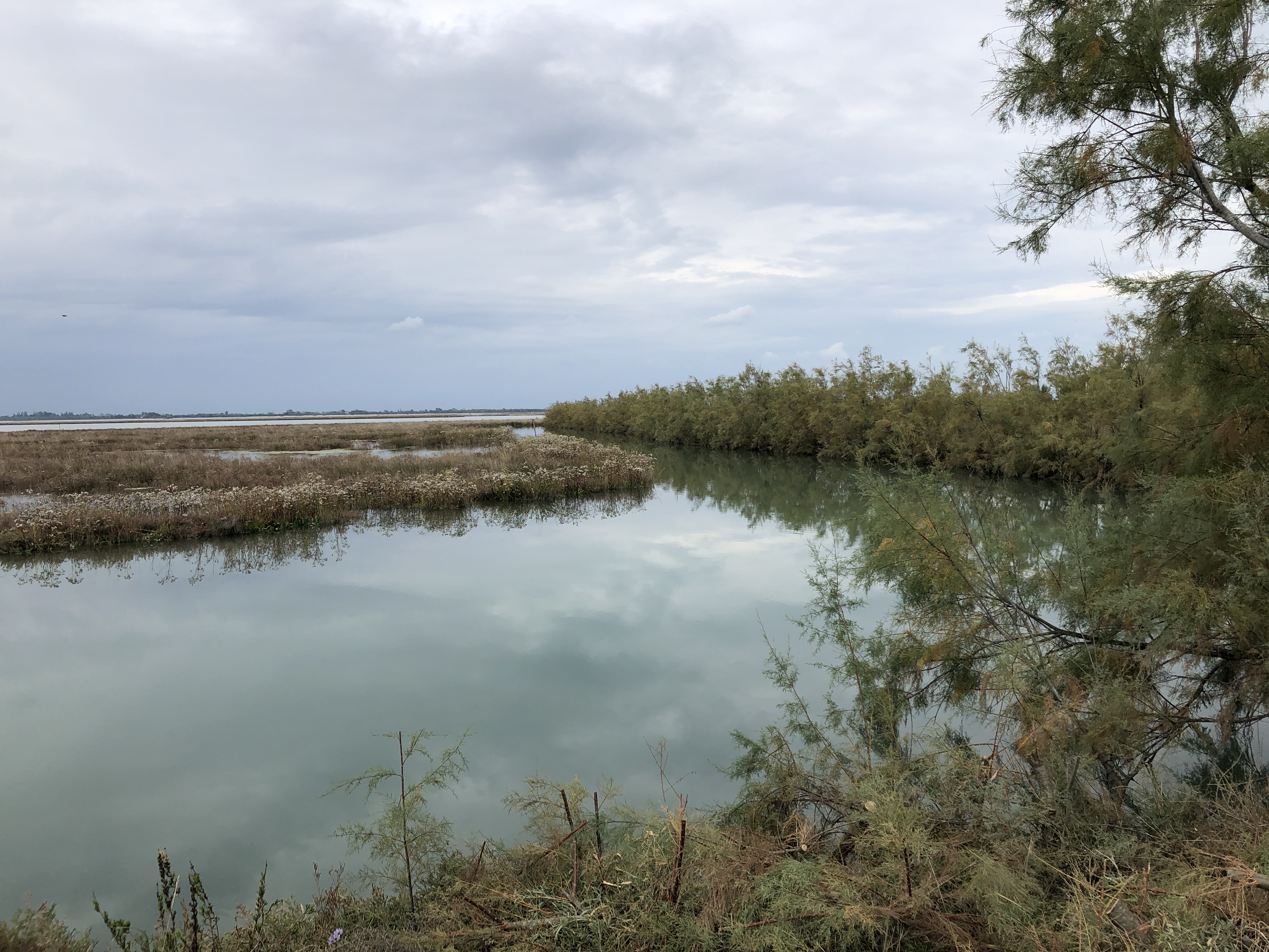 Torcello - a wetland sanctuary for wildlife of all types. Venetian Lagoon.