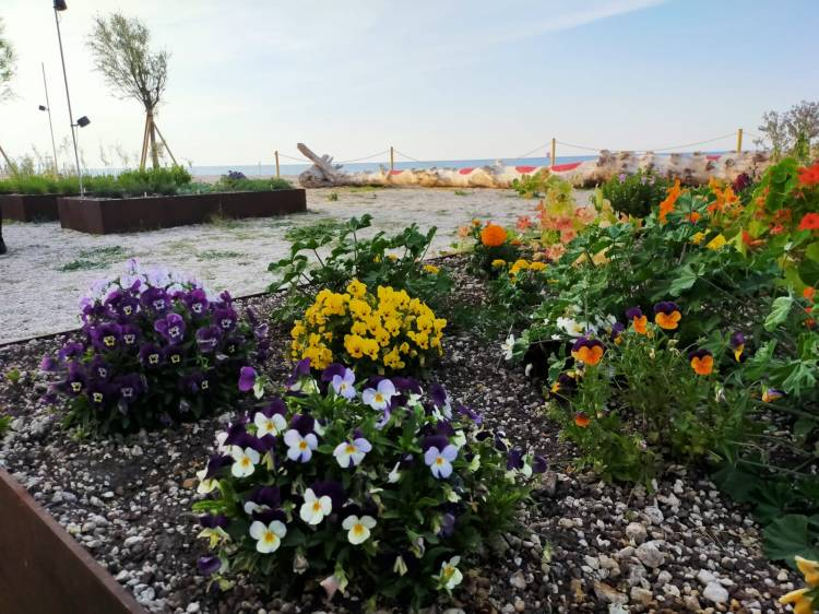 Moreno Cedroni's herb garden 'al mare'